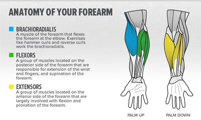 Back To Basics Forearms